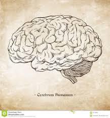 the brain essay expository essay prompt brain essay brain essay brain essay human brain essay