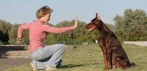 Dog Trainer Resume Dog Trainer Resume Sample Clr