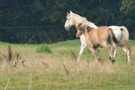 Wie Ein Blindes Pferd Sein Schicksal Meisterte Sz Magazin