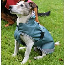bucas freedom waterproof dog rug 300g