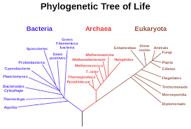 Three Domains Of Life Venn Diagram 1 3 Classification The Three Domain System Biology