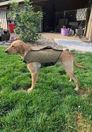 Best Dog Vests Refuge Forums