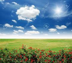 green grass blue sky flowers. Garden Red Flower Lawn Blue Sky Daylight Green Grass Stock Photo Flowers L
