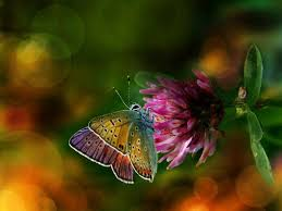 real beautiful colorful butterflies. Simple Real Butterflies Images Beautiful Colorful HD Wallpaper And  Background Photos Intended Real A