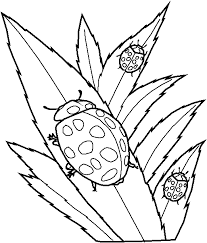 Small Picture Ladybug Coloring Page Color Book
