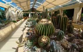 Small Picture Indoor Cactus Garden Design Tips Outdoor Rock Cactus Gardens