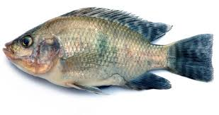 pic of fish.  Pic Innovation In Pic Of Fish T