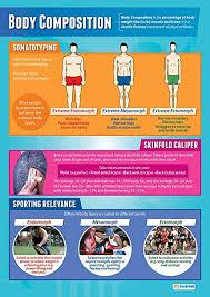 Amazon Com Body Composition Pe Posters Gloss Paper