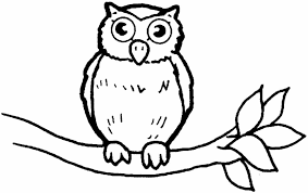 Owl Coloring Pages Colored Pinterest Only Coloring Pages