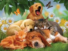 sleeping pets 640x480 480x640 free hot mobile phone wallpapers