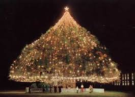 The World's Largest Living Christmas Tree is in Wilmington, NC. The tree is  a