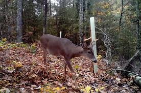 The Wildlife Group  Fruit Trees And Select Hardwoods For Deer Best Fruit Trees For Deer