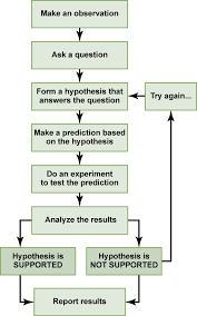 Example Of A Flow Chart Observation Scientific Inquiry Biology For Non Majors I