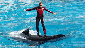 original shamu. Exellent Shamu Dawn Brancheau On The Back Of An Orca At SeaWorld Orlando In 2005 Inside Original Shamu