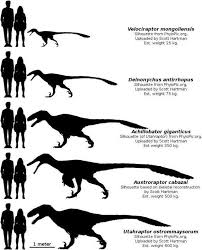 Velociraptor Size Chart