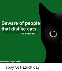 Image result for happy st patricks cats