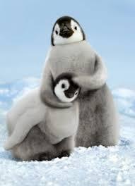 cute penguins. Beautiful Penguins Animals Pictures_cute Penguins Intended Cute Penguins