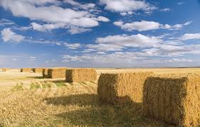 Advantages Of Silage Bags Over Traditional Silage Agriplastics
