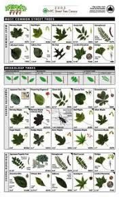 Identification Chart For Leaves Uk Tree Leaf Identification Chart Common Tree Leaves