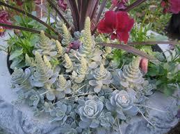 top ten succulent varieties easy gardening desert unusual plants cactus beginner pots plants