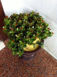 office feng shui plants. Feng Shui Plants For Harmony And Positive Energy In The Living Room Office