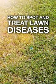 Brown Patch Disease Spot And Treat Lawn Diseases Lawn Tips By Troy Bilt