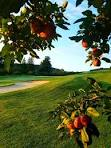 Apple Greens Golf Course - Home | Facebook