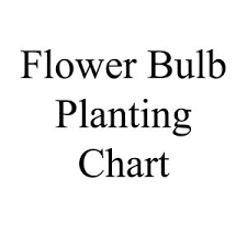 Flower Bulb Planting Chart Debruyn Seed Store