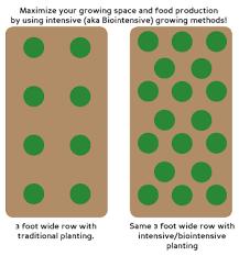 Traditional Planting Vs Intensive Aka Biointensive Planting