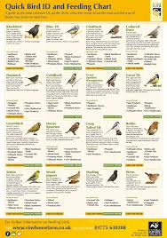 Mealworm Size Chart House And Garden Feed Chart Garden House And Feeding