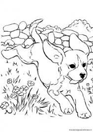 Kleurplaten Hondenkapsalon Amber