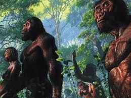Australopithecus afarensis - reconstruction by John Gurche   Evolución  humana, Evolucion