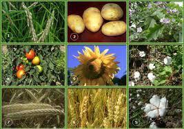 Культурные растения Интересные факты