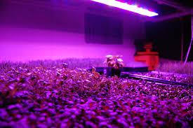 Apache Tech Grow Lights Led Vs Hid Hydroponic Grow Shops Garden Centers