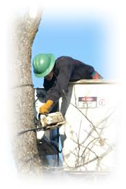 robertu0027s tree service inc robs tree service90