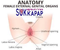 ช่องคลอด หรือ อวัยวะเพศหญิง • sukkapap ข่าวสุขภาพ ข่าวการแพทย์ล่าสุด