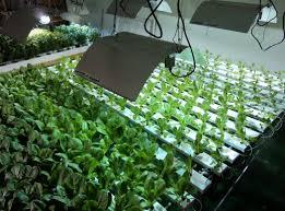 indoor gardening supplies. Mesmerizing Indoor Gardening Supplies Garden Supply S