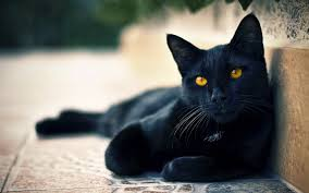 black cats with yellow eyes kitten. Unique Cats In Black Cats With Yellow Eyes Kitten A