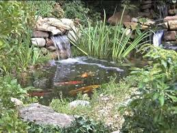 chapter 7 plants fish and water care