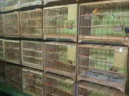 Disamping memiliki harga jual yang tinggi burung kenari ini. 14 Model Kandang Burung Kenari Koleksi Terkini