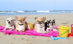 Image result for summer dogs