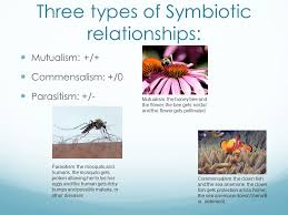 symbiotic relationships symbiotic relationships ppt video online download