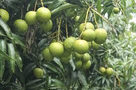 When Sugarcane Fails Fruits Give Succour  KERALA  The HinduKerala Fruit Trees