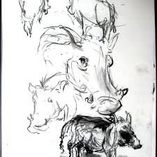 Sketches Animal Sketching Animals At The Zoo And Beyond