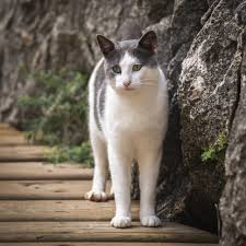 Image result for cat by wall