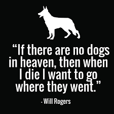 Dog Passing Quotes Impressive 48 Cute Dog Quotes For Dog Lovers With Funny Images