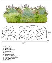 Small Picture The 25 best Ornamental grasses ideas on Pinterest
