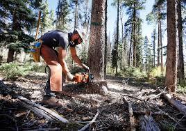 Logging Returns To The San Juan Mountains