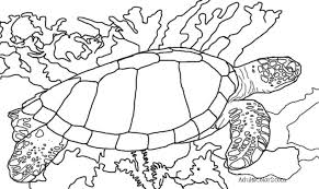 Small Picture Sea Turtle Coloring Page Help Hawksbills 6650 Bestofcoloringcom