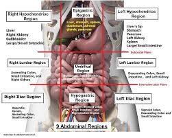 Astigmatism from an anatomy perspective; Four Abdominal Quadrants And Nine Abdominal Regions Anatomy And Physiology